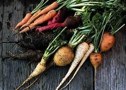 Récolte de légumes sur une table de jardin